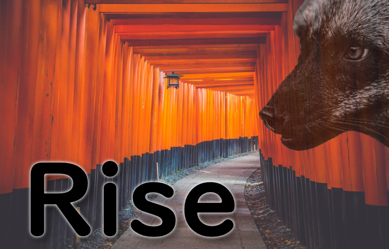 Cover Concept for upcoming book Rise by Amy Winters-Voss